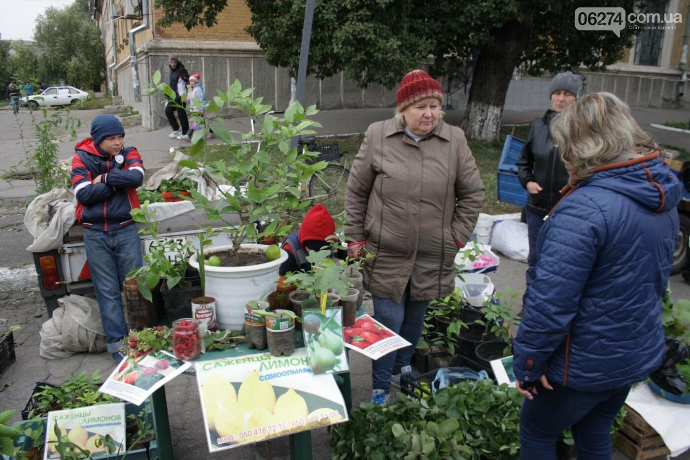 В Бахмуте открылась ярмарка «День садовода», фото-17