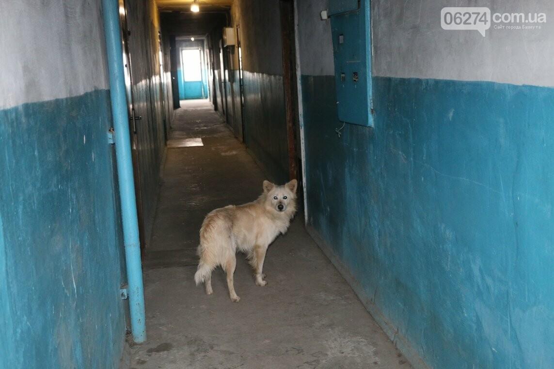 Дома-призраки в Бахмуте: есть ли выход?, фото-6