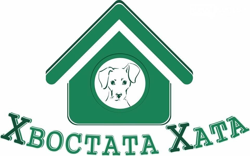 В Бахмуте пройдет конкурс для студентов по строительству будок для бездомных собак, фото-1