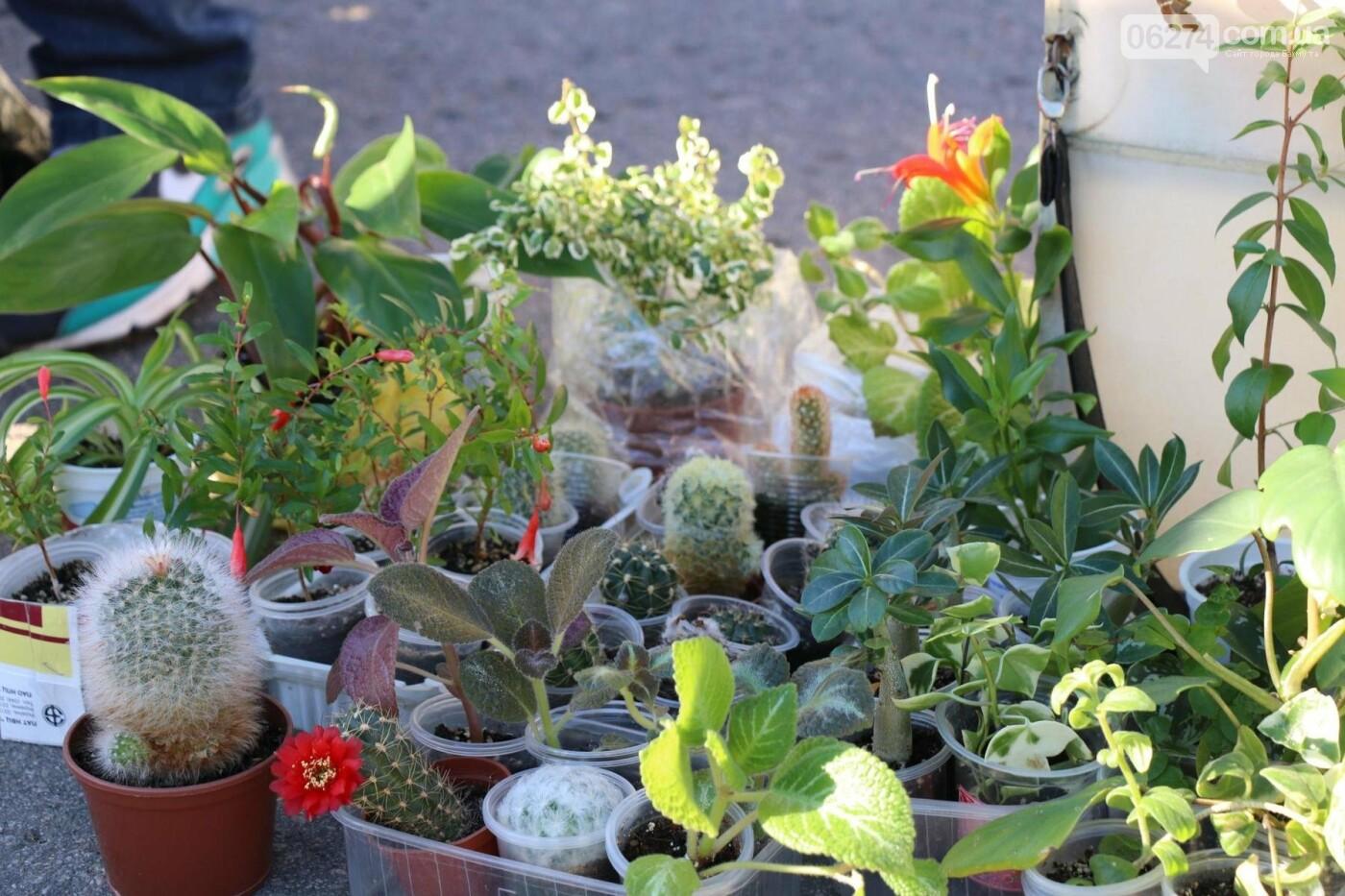 В Бахмуте прошла ярмарка «День садовода» (ФОТО), фото-3