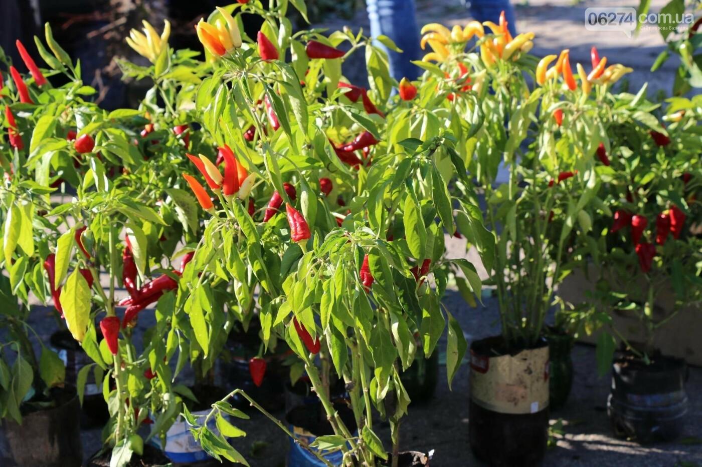 В Бахмуте прошла ярмарка «День садовода» (ФОТО), фото-8