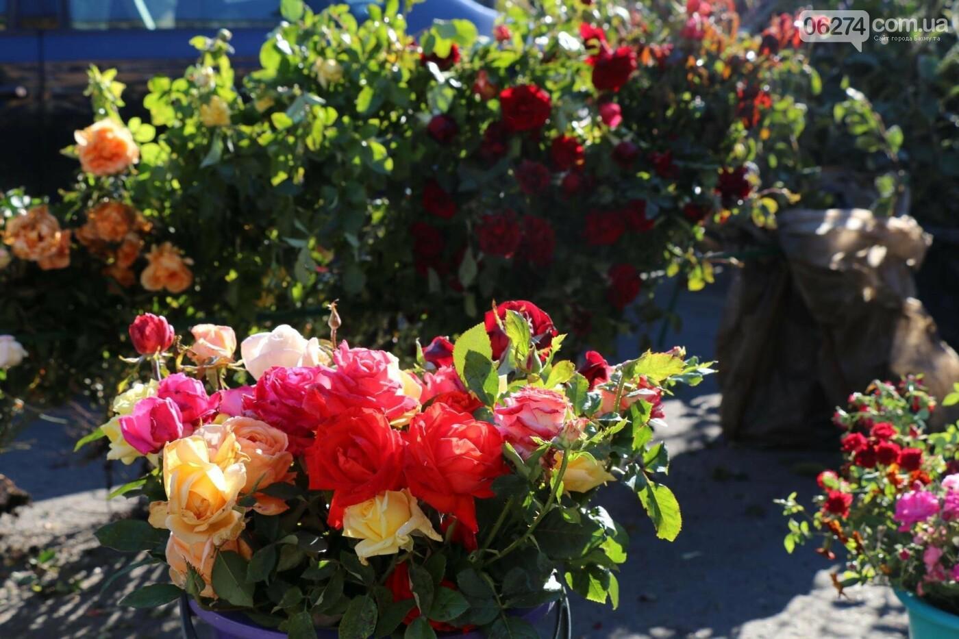 В Бахмуте прошла ярмарка «День садовода» (ФОТО), фото-4