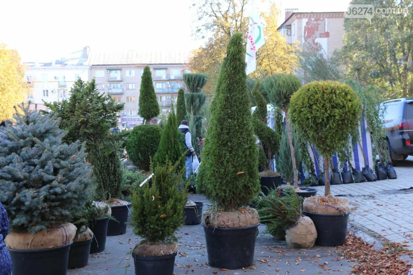 В Бахмуте прошла ярмарка «День садовода» (ФОТО), фото-17
