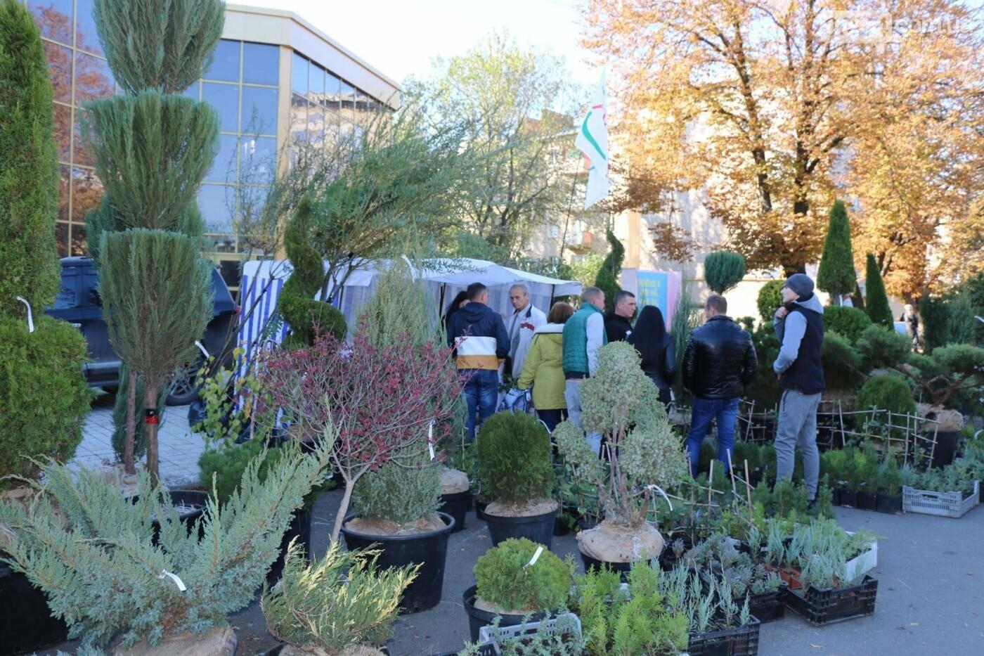 В Бахмуте прошла ярмарка «День садовода» (ФОТО), фото-22