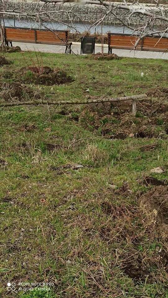 В Бахмуте вандалы выломали молодые деревья на набережной (ФОТО), фото-1