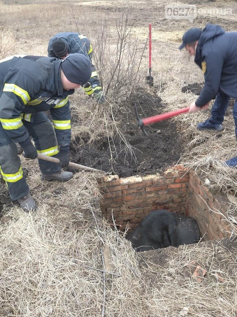 В Бахмутском районе спасатели вытащили из ямы корову, фото-2