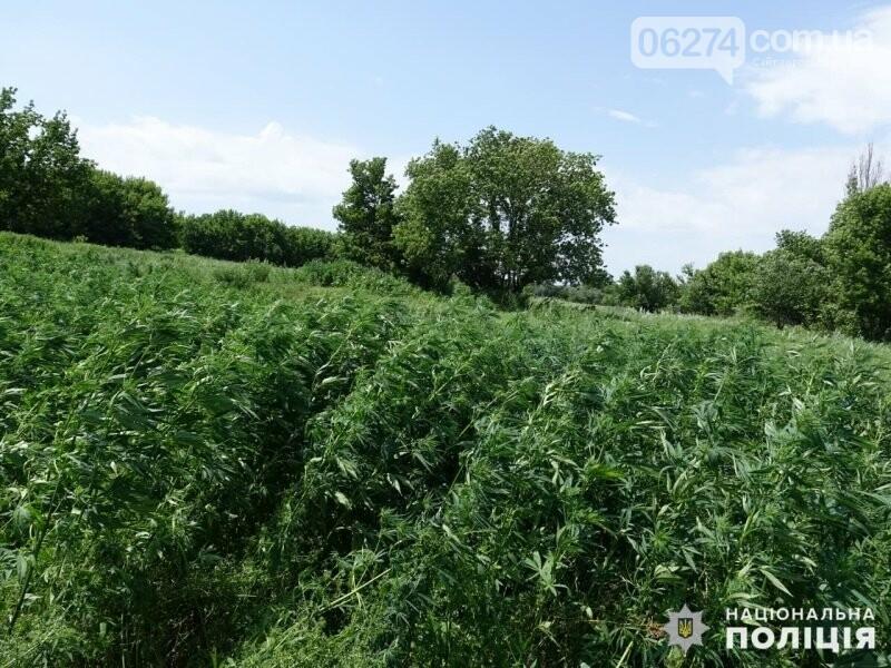 На территории Соледарский ОТГ полицейские уничтожили 4700 незаконно высеянных растений конопли, фото-1