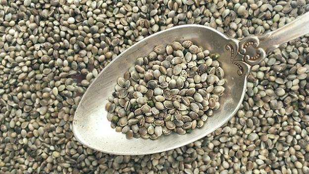 семена конопли крупным планом